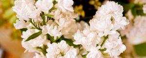 white-flowers-300x120.jpg